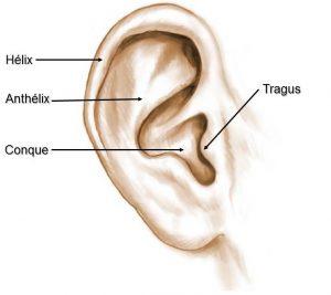 anatomie d'une oreille