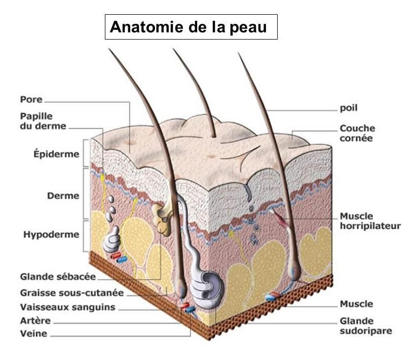 Les verrues et la pigmentation sur la peau