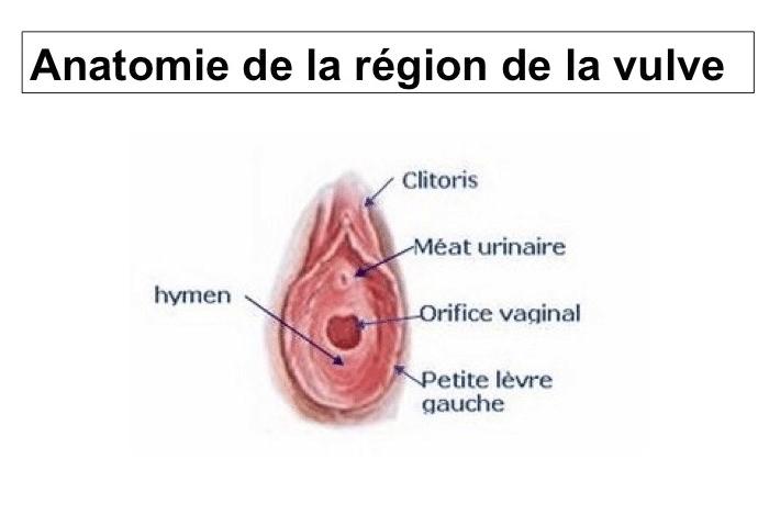 nymphoplastie Lyon